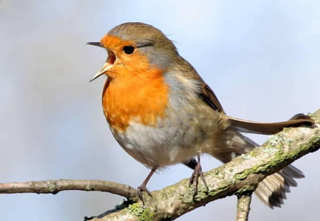 Bird Chirpin