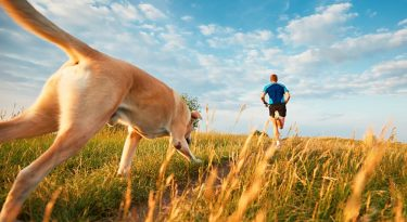 Shutterstock 436050019
